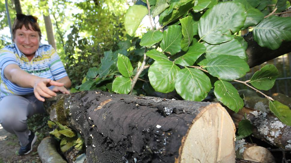 Gartenbauamtschefin Doris Fath zeigt ein Stück Baumstamm mit Pilzbefall.