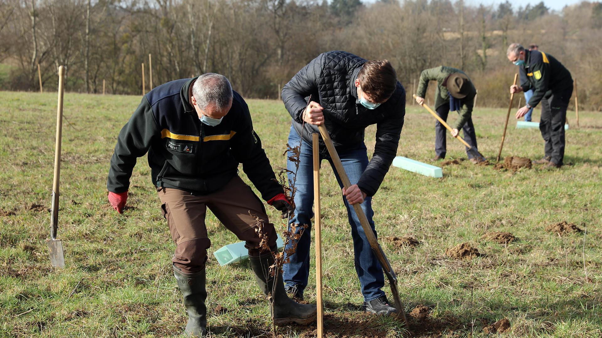 Mitarbeiter von Forst, Stadt und KSC – von links Ulrich Kienzler, Michael Becker, Thomas Hock und Bernd Struck – pflanzen junge Bäume am Eisenhafengrund in Durlach.