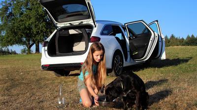 Wagen lüften und Wasser für den Hund: Wer mitdenkt, kann auch beim Autofahren der Hitze trotzen.