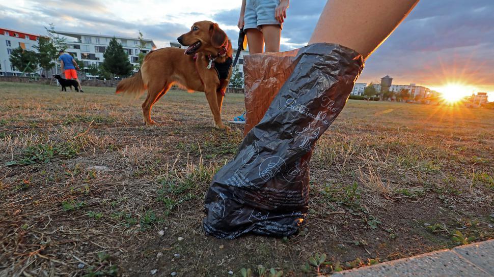 Hundehaltung in der Stadt erfordert Rücksicht und die Einhaltung von Regeln.