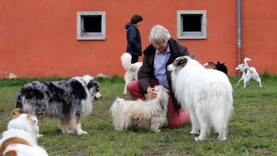 Mann mit vier Hunden