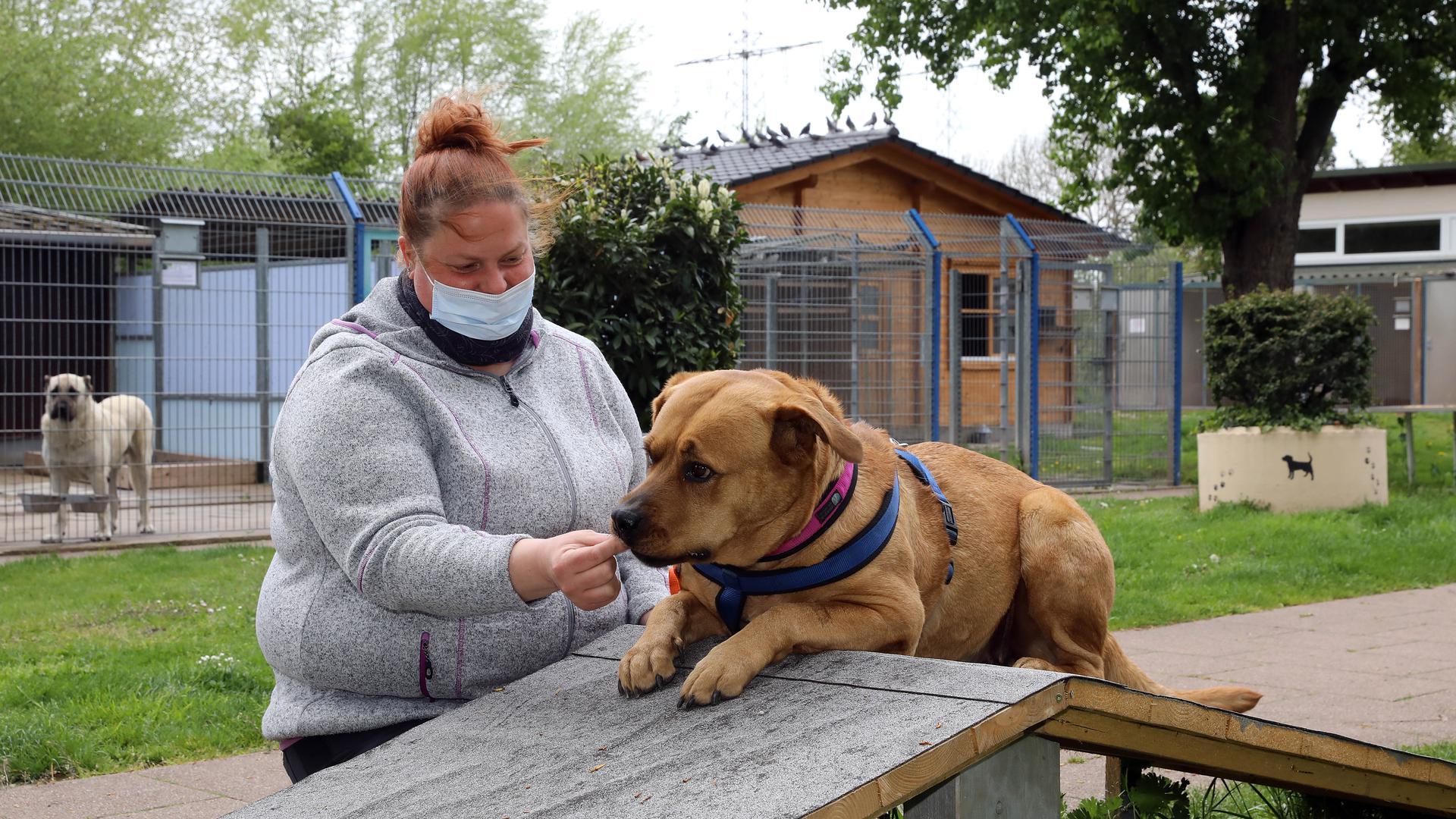 Frau steht neben einem Hund
