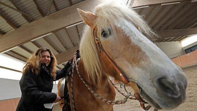 Braunes Pferd mit Frau