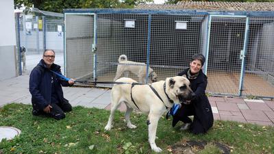 Tierpfleger Ivo Dubrau und Ingrid Faller führen den Kangal-Rüden Conan über das Gelände des Tierheimes.