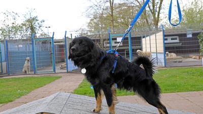 Debatte: Hunde aus dem Tierheim sollten für ein Jahr von der Steuer befreit werden, findet die AfD-Fraktion.