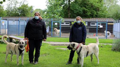 Zwei Frauen halten zwei Hunde an der Leine