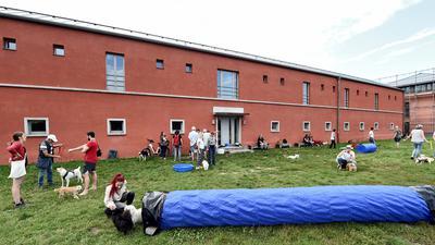 Rund 30 Vierbeiner: Der Andrang auf der Hundewiese am Schloss Gottesaue ist am Donnerstagnachmittag oft groß.