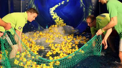 Mitglieder des Vereins Round Table 46 fischen die ersten 50 Enten eines Vorlaufs aus dem Rutschenauslauf.