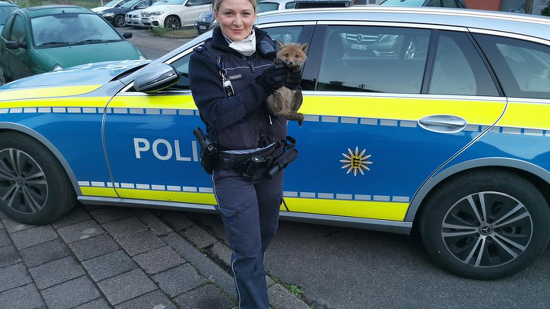 Erfolgreicher Einsatz: Diesen jungen Fuchs rettete die Polizei. Er hatte sich in einem Gartenzaun verheddert und konnte sich nicht allein befreien.