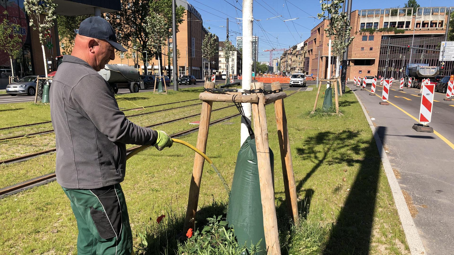 Ein Mann gießt einen neu gepflanzten Baum in der Kriegsstraße.