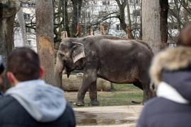 Ein Elefant im Karlsruher Zoo