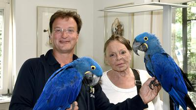 Ein Mann hält zwei blaue Papageien, daneben steht eine Frau