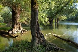 Rheinschlute bei Hochwasser