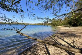 Blick auf den Grötzinger Baggersee, im Vordergrund die Äste eines Baumes.