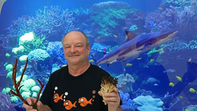 """18.02.2021  Johann """"Hannes"""" Kirchhauser vor dem Haibecken im Staatlichen Naturkundemuseum Karlsruhe mit Korallen aus eigener Zucht: einer Hirschgeweihkoralle, die genauso heißt, wie sie aussieht, sowie einer Buschkoralle, die auch Himbeerkoralle genannt wird."""