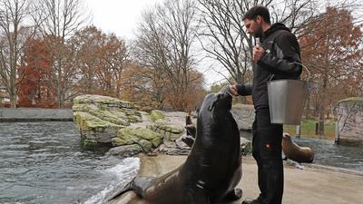 Wann können Besucher im Karlsruher Zoo wieder die Seelöwen besuchen? Das Corona-Reglement ist da noch unklar.