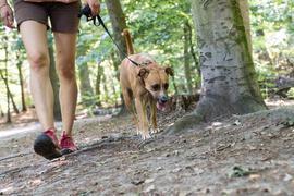Mulmiges Gefühl beim Gassi gehen: Hundehalter sehen Giftköder, die am Wegrand oder im Wald ausliegen, oft gar nicht oder zu spät, um den Hund vom Fressen abzuhalten .