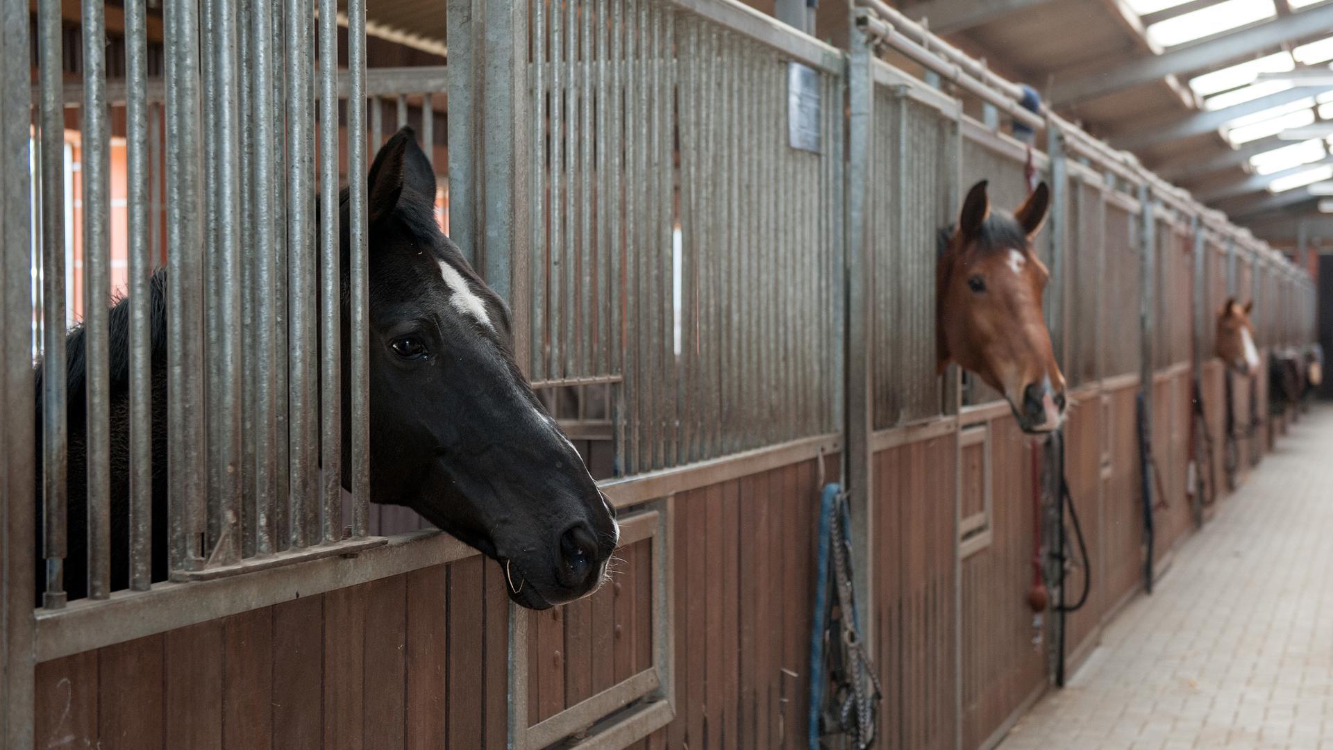 Pferde in einem Stall