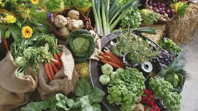 """Ein bunter Strauß an frischem Gemüse aus heimischem Anbau ist eines von unzähligen Produkten, über deren Herstellung sich Verbraucherinnen und Verbraucher im Rahmen der Aktion """"Gläserne Produktion"""" vor Ort informieren können."""
