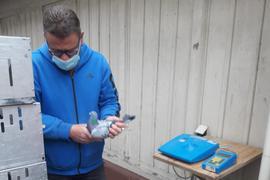 Corona-Konform: die Züchter der Brieftauben-Reisevereinigung Karlsruhe-Nord lesen die Flug-Zeiten ihrer Vögel im Anschluss an den Wettbewerb mit Schutzmasken und Sicherheitsabstand aus.