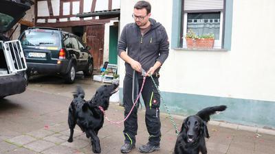 männliche Person mit zwei an der Leine von ihm geführten Hunde