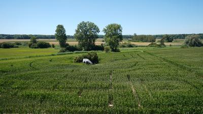 Auf rund einem Hektar wurde auf dem Bolzhof ein Labyrinth ins Maisfeld gehackt, in dessen Mitte sich eine weiße Aussichtsplattform befindet.