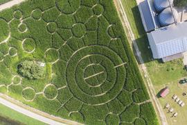 Kreise im Maisfeld: Das Labyrinth auf dem Bolzhof in Dettenheim.