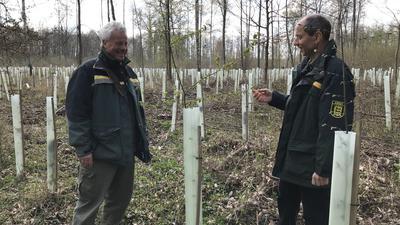 Forstbetriebsleier Lothar Himmel und Revierleiter Lothar Haring schauen sich an, wie die jungen Bäumchen auf einer Schadfläche bei Dettenheim gedeihen.