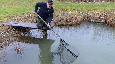 Anglerverein Linkenheim, Gewässerwart beugt sich mit Käscher vom Steg aus über einen Teich