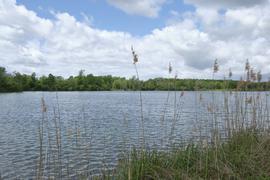 Geschützte Natur: Der Baggersee Streitköpfle ist zu großen Teilen  ein Biotop.