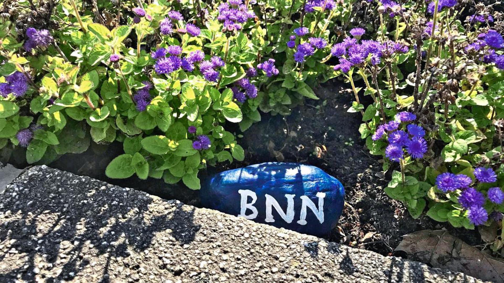 """Der BNN-Stein wartet darauf, gefunden zu werden. Wer Glück hat, darf sich vielleicht schon bald über den BNN-Bildband """"Der Karlsruher Zoo"""" freuen."""