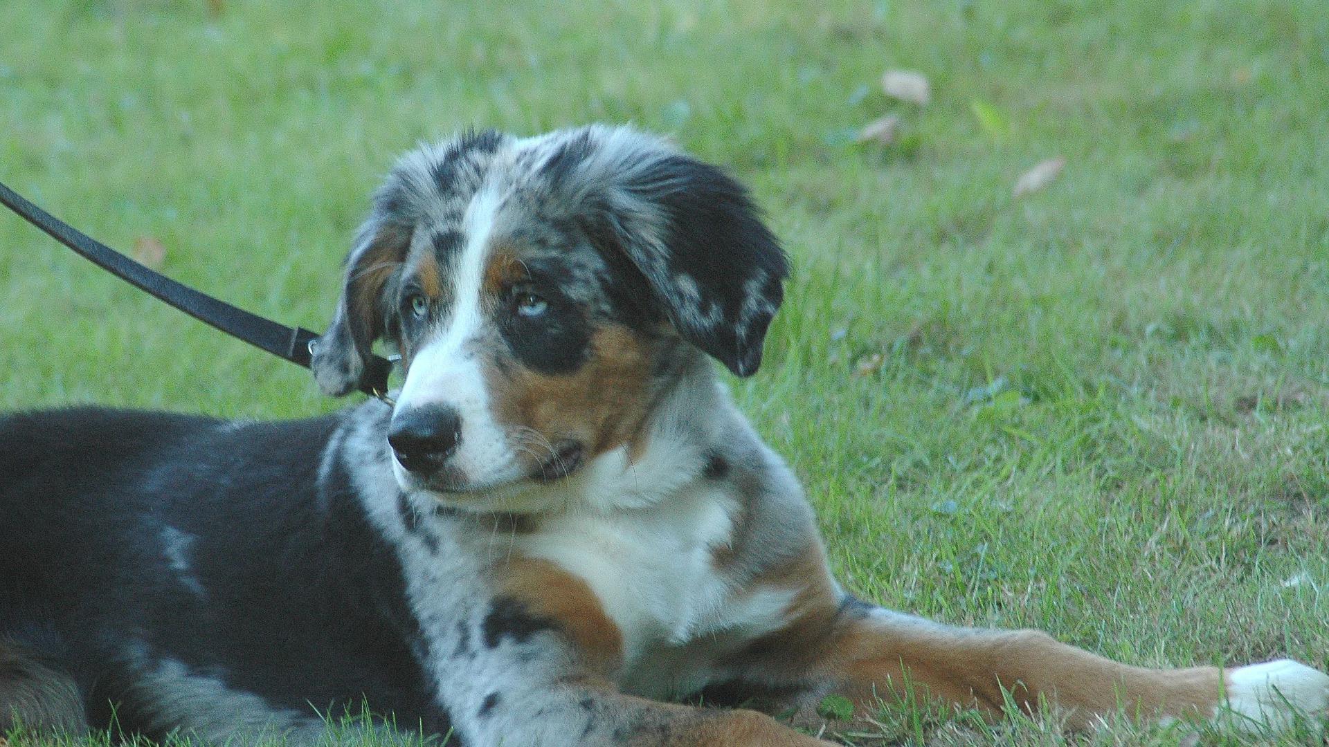 IM WELPENALTER sind Hunde noch nicht reif für eine Kastration. Hündinnen wie Rüden brauchen erst mal Zeit, um ihre Persönlichkeit zu entwickeln. Fotos: Lechner