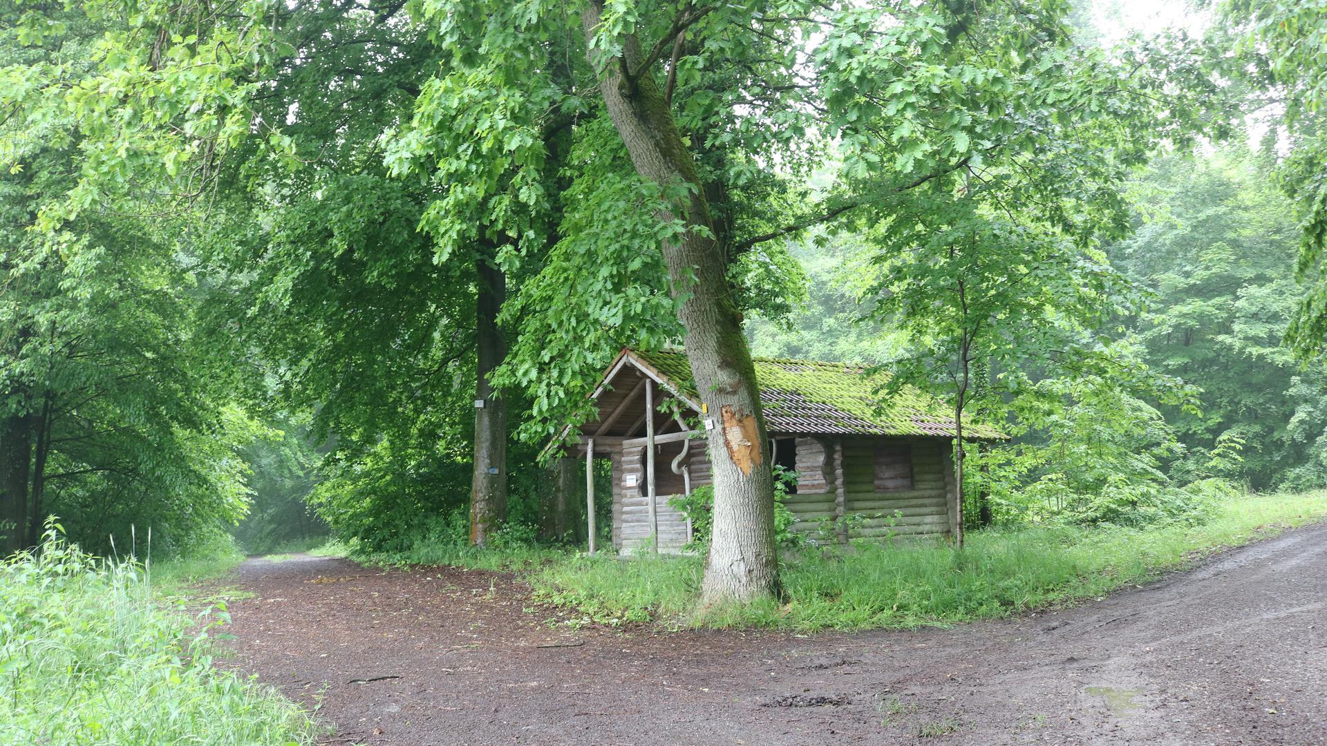 Möglicher Standort Hinterer Heuberg: Die Gegner sehen diesen Wald als gefährdet an, wenn hier Windräder gebaut würden