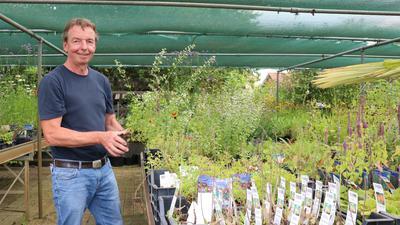 Echinacea und Steinquendel: Es sei nicht schwer, einen Garten insektenfreundlich zu gestalten, meint Roland Stärk, Besitzer eines Garten- und Landschaftsbaubetriebs in Weingarten.