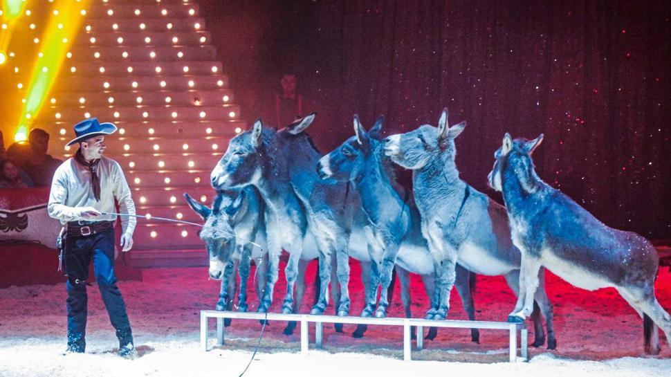 Ein tierisches Vergnügen erwartet den Gewinner oder die Gewinnerin des 35. Rätsels beim Weihnachtscircus in Karlsruhe.