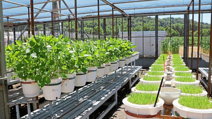 PFC-Versuche mit Soja und Weidelgras im Landwirtschaftlichen Technologiezentrum Augustenberg sollen es zeigen.