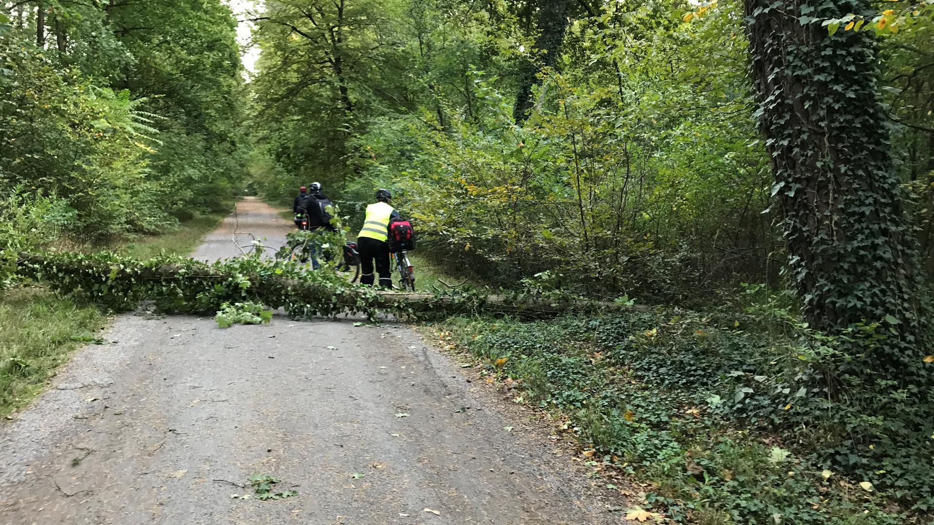 Sturm Mortimer sorgt in Karlsruhe für umstürzende Bäume.