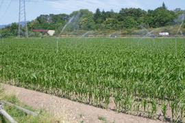Die Bodenbelastung durch PFC in Mittelbaden hat strafrechtlich zumindest nach bisherigem Kenntnisstand keine Folgen. Die Staatsanwaltschaft stellte das Verfahren gegen einen Kompostbetrieb ein.