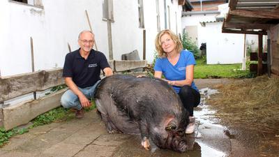 Auf dem Gnadenhof Pfinztal sitzen zwei Mitarbeiter neben dem Hängebauchschwein Emma.