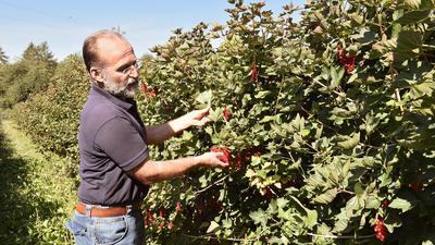 Beliebtes Obst zum Greifen nah: Friedhelm Wenz zäunt den größten Teil seines Hofes nicht ein. Besucher dürfen zwischen den Sträuchern und Bäumen spazieren.