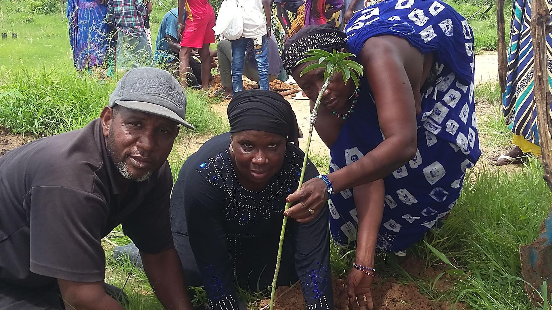 Anpflanzungen - Afrika