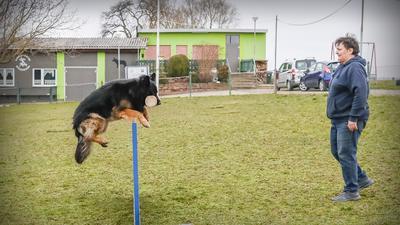 """Barbara Losereit, Vorsitzende des Hundevereins Wössingen, trainiert auf dem Wössinger Hundesportplatz mit ihrem altdeutschen Schäferhund """"Zeus vom schwarzen Traum"""" an einer Hürde."""