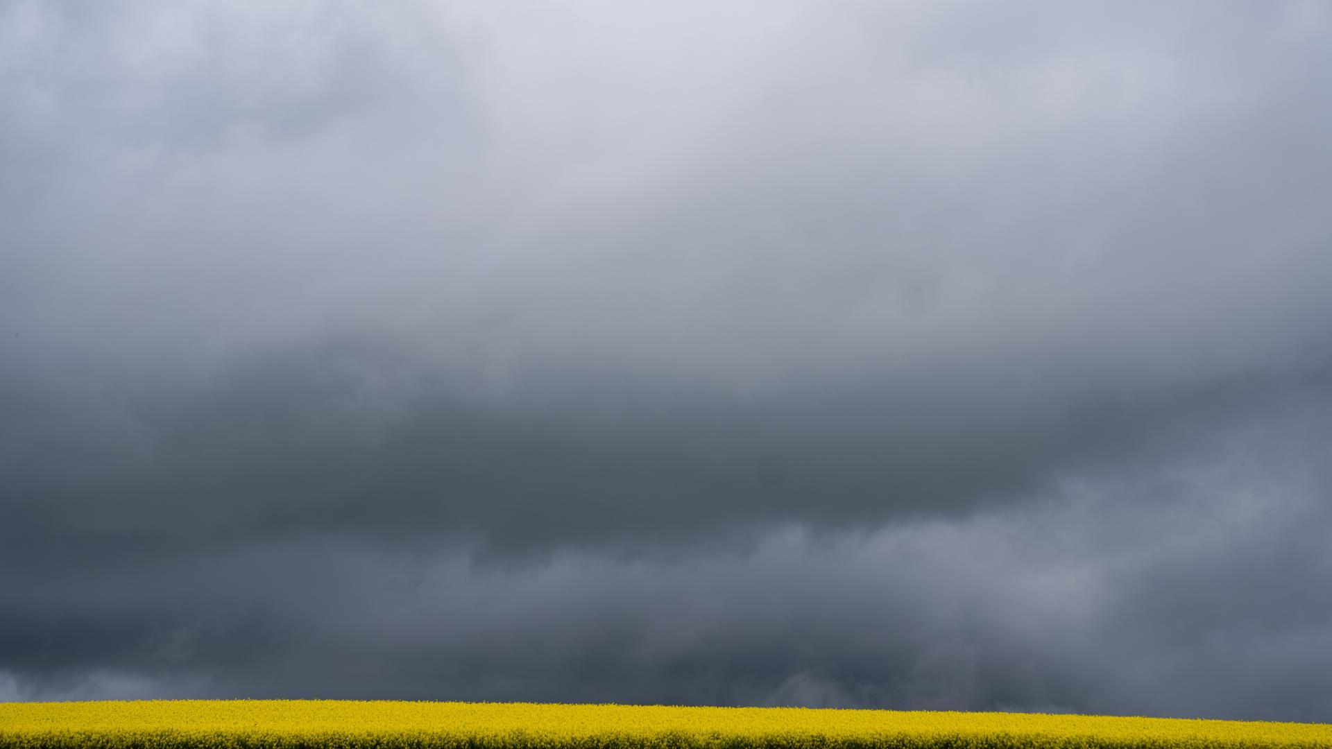 Raps blüht unter den dunklen Regenwolken. +++ dpa-Bildfunk +++