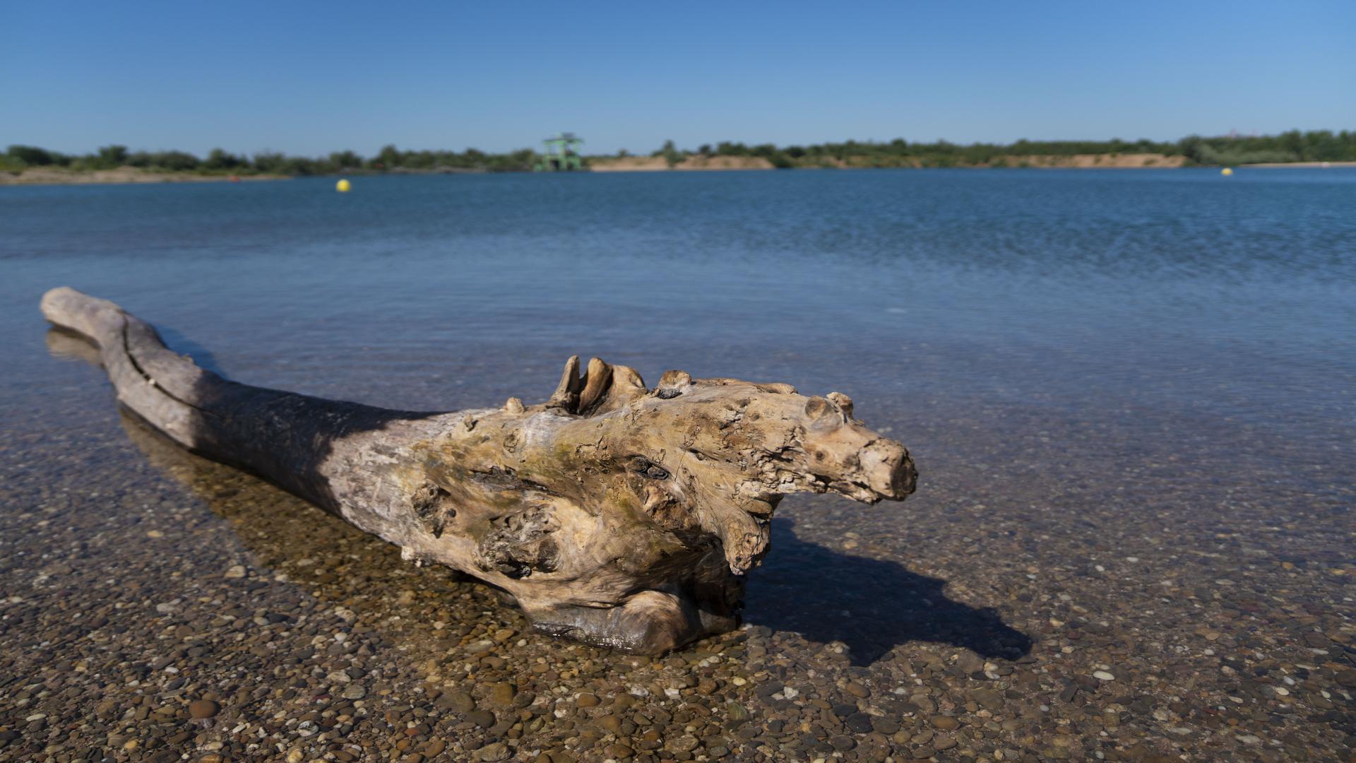 Ein Stück Holz liegt am Ufer des Epplesees.