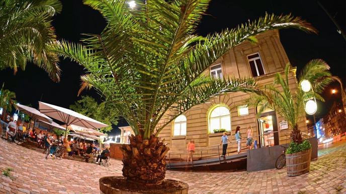 Auch in Karlsruhe gibt es Palmen.