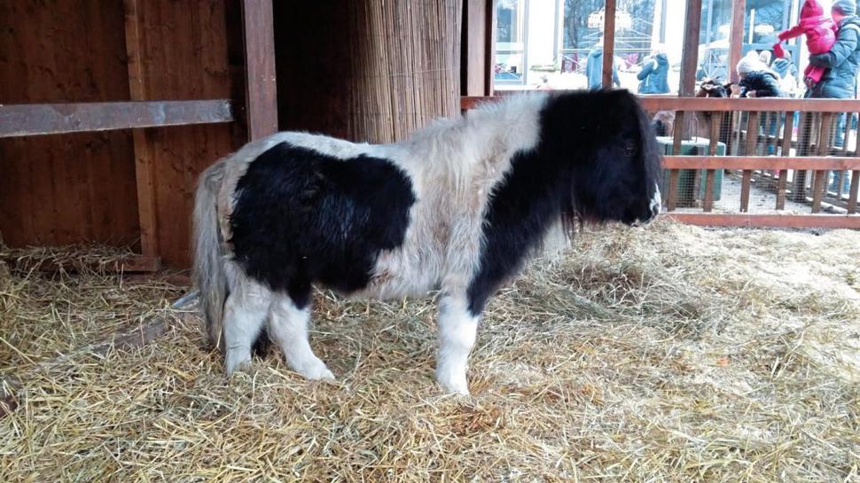 In der lebensgroße Krippe in Baden-Baden warten Vierbeiner wie dieses Pony auf die Besucher.