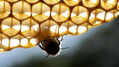 Das Bienen-Volksbegehren stößt zunehmend auf Kritik. Selbst die organisierten badischen Winzer stehen den Inhalten mehrheitlich ablehnend gegenüber. Bei der Bruchsaler OGA warnt man vor einem Aus für zahlreiche landwirtschaftliche Betriebe.