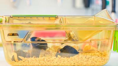 Mäuse bewegen sich in einem geschlossenen Behälter