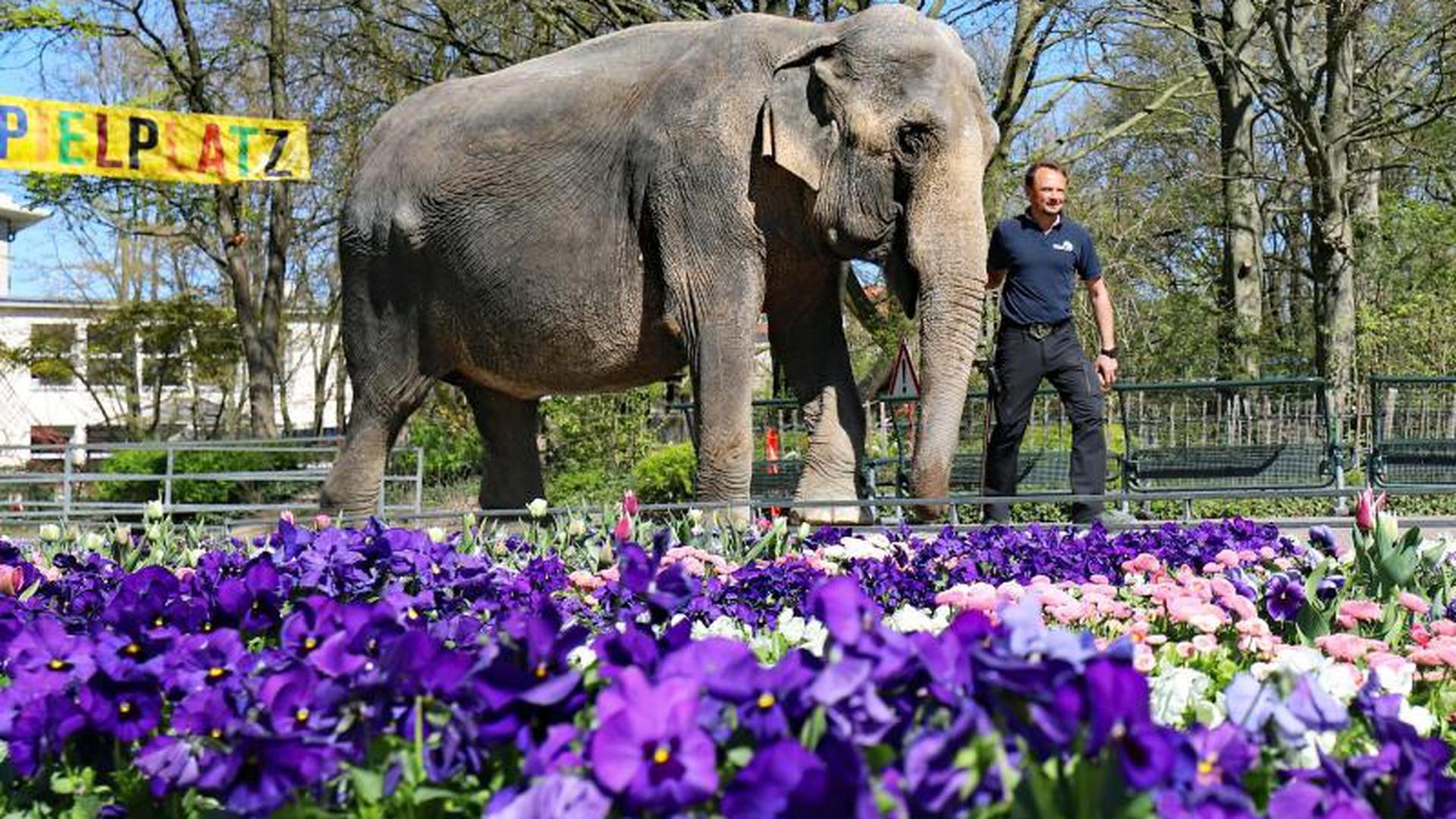 Zoo Karlsruhe Online Reservierung