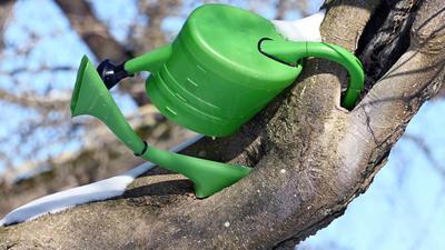 In einem Baum im Botanischen Garten hängt eine grüne Gießkanne.